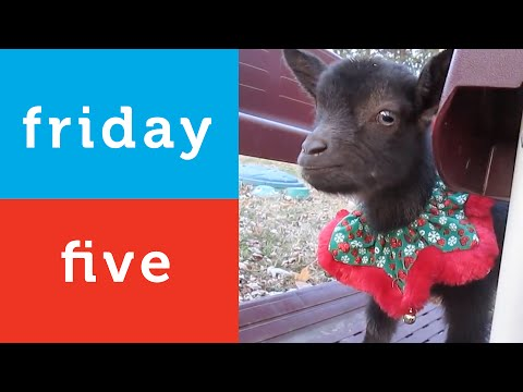 Santa Cat - Holiday Animal Video Compilation (Petco Friday 5)