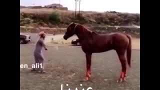 Horse training ISIS