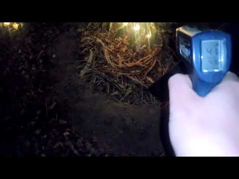 How I protect my plants from frost in Phoenix Arizona using Iv organic white and Christmas lights