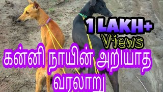 Unknown history of kanni dogs | கன்னி நாயின் அறியாத வரலாறு | Indian hounds
