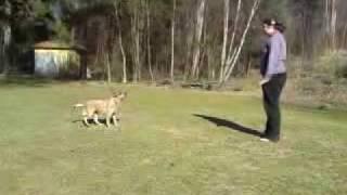 Sydney Cattledog- Freestyle