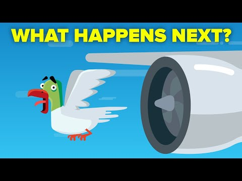 What Happens When a Bird Hits a Plane Engine?
