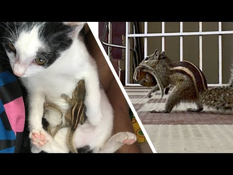 Rescuing  Baby Squirrels Outside - Reunion with Mother After 4 days (Happy ending story)