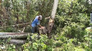4K Albizia Tree Removal Big Island Hawaii