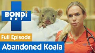 Adorable Baby Koala Is Found Malnourished | FULL EPISODE | Bondi Vet
