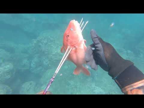 Spearfishing Maui