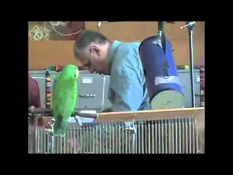 articulation music performance