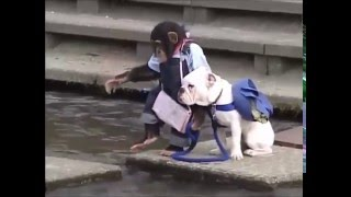 Приколы про животных  Обезьяна и пес