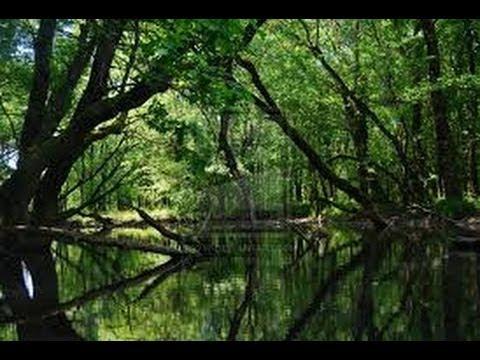 Türkiye'nin en önemli subasar ormanlarından biri olan Karacabey Longozu