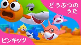 サメのかぞく |  3Dアニメバージョン | どうぶつのうた | リトミック | ピンキッツ童謡