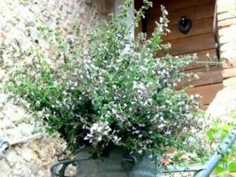 La sugarella in terra di siena italia il giardino for Masini terrecotte impruneta