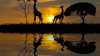 Путешествие в Африку. Калахари.(