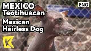 【K】Mexico Travel-Teotihuacan[멕시코 여행-테오티우아칸]아스텍 제국의 털 없는 개/Mexican Hairless Dog/Aztec/Remains/Native