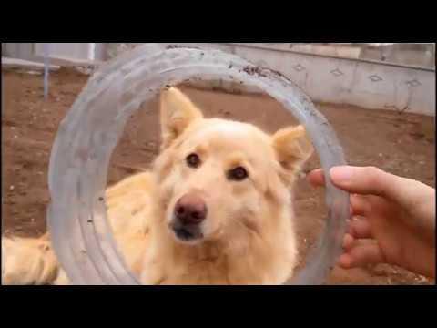Funny Dog Videos Compilation (2018)