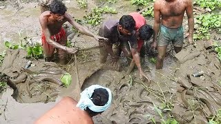 """Huge Catfish Catch in Mud Canal Serial """"Fishing"""" More Biggest Fishes / Fish Hunt Fishing"""