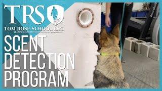 The Tom Rose School Scent Detection Program  |  Dog Training