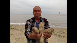 Ловля пеленгаса летом 2020 Снасти наживка рыбалка