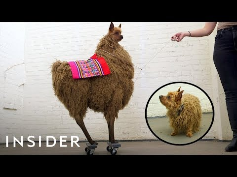 Why This Dog Wears Extreme Costumes