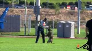 2014 Canadian Police Canine Association Trials -  Criminal Apprehension  -  Youtube