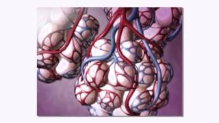 22. La Fibrose Pulmonaire