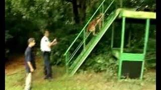 Politieserie: mee met de hondenbegeleider