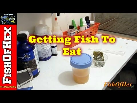 How To Get Fish To Eat | Homemade Garlic Juice