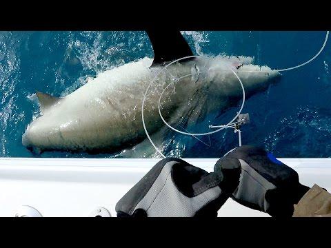 Giant 500lb Bull Shark and Vertical Jigging for Jack Crevalles