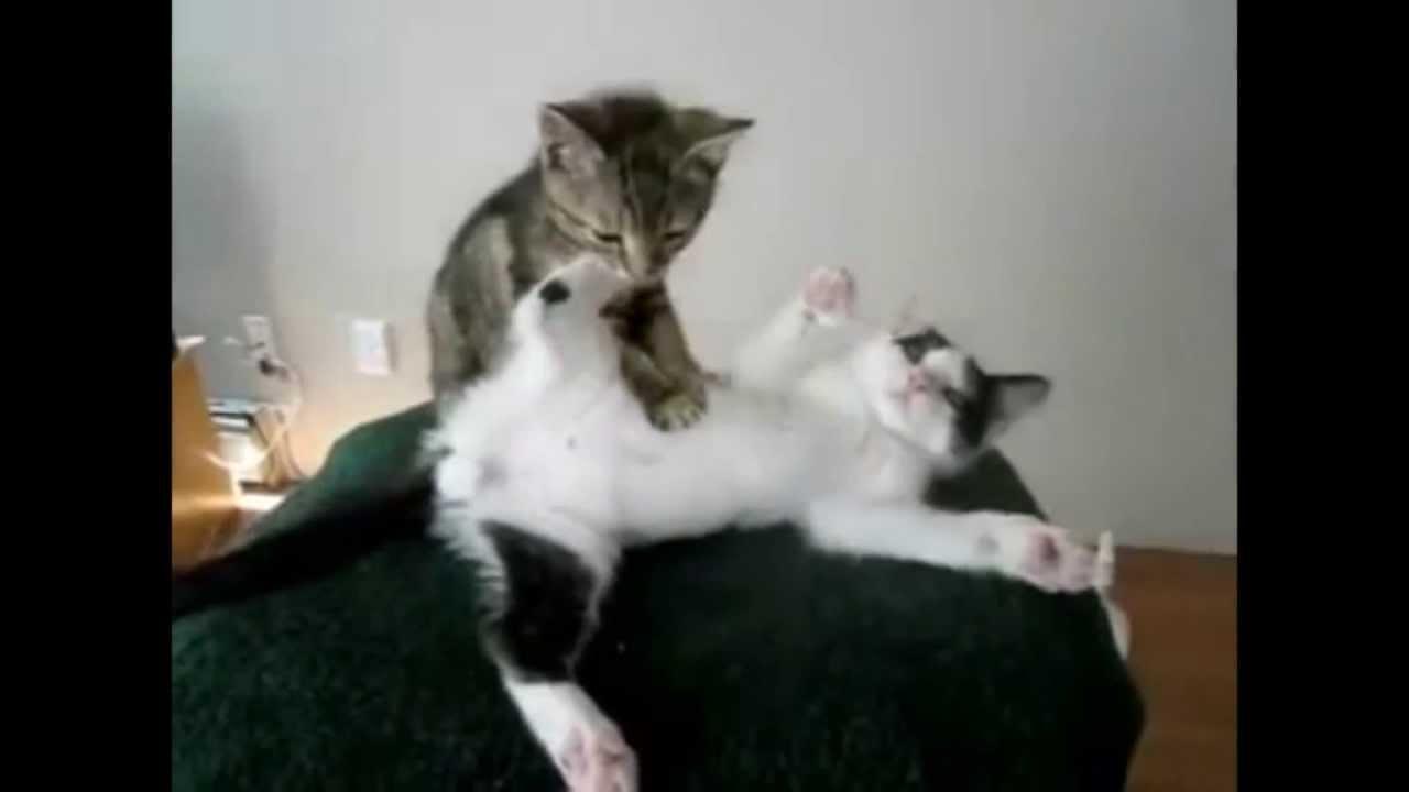 Глисты у кошек и котят. Как избавиться от глистов Кошка 5