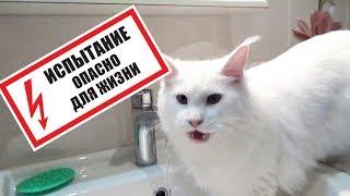 Вода и кошки - ожидание и реальность!