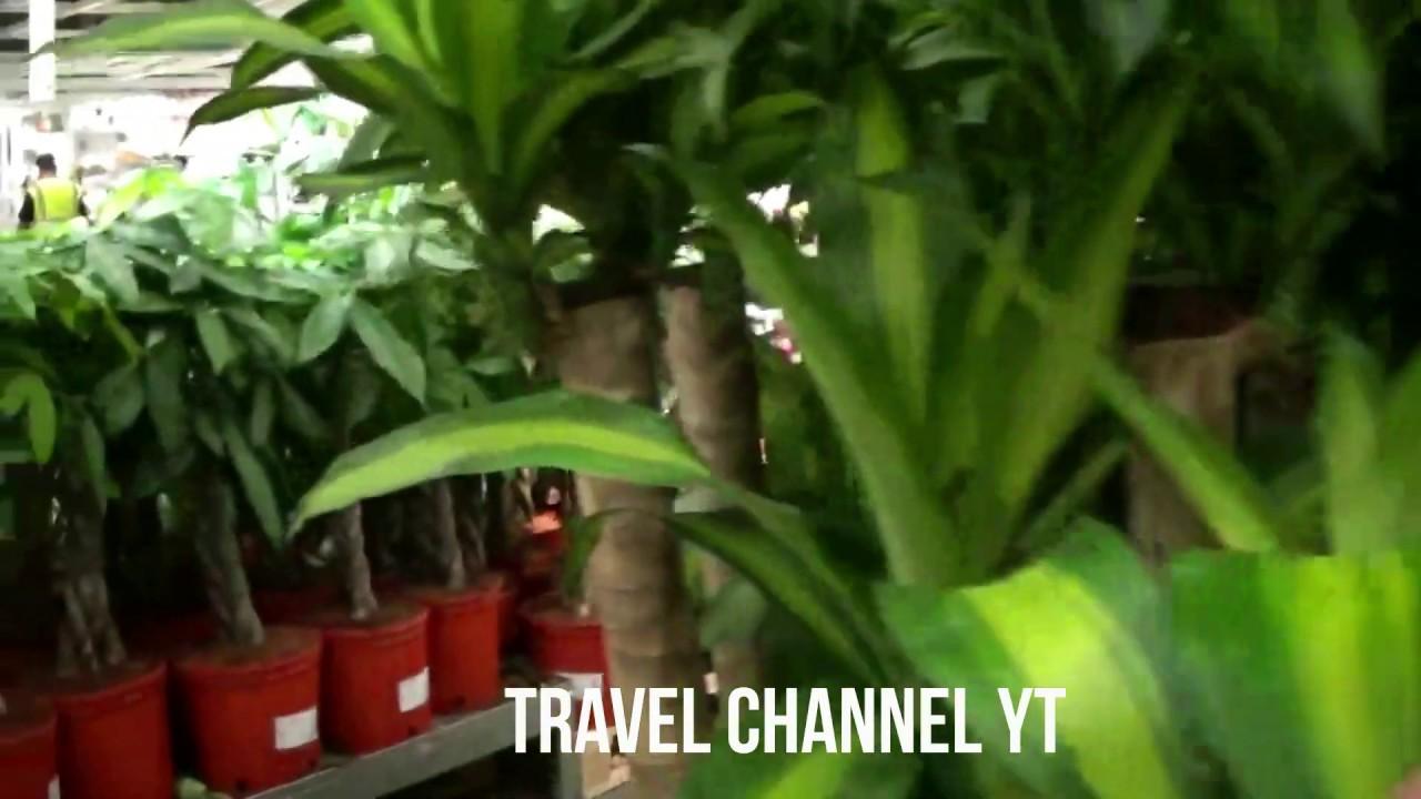 Ikea Plants - Ikea Garden and Indoor Plants 2020 for Home ...