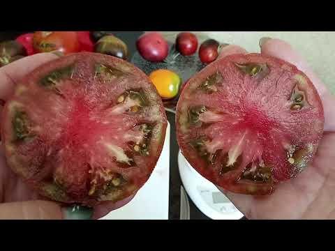 Сорта томатов 3 часть. О цене на семена, о заказе семян.
