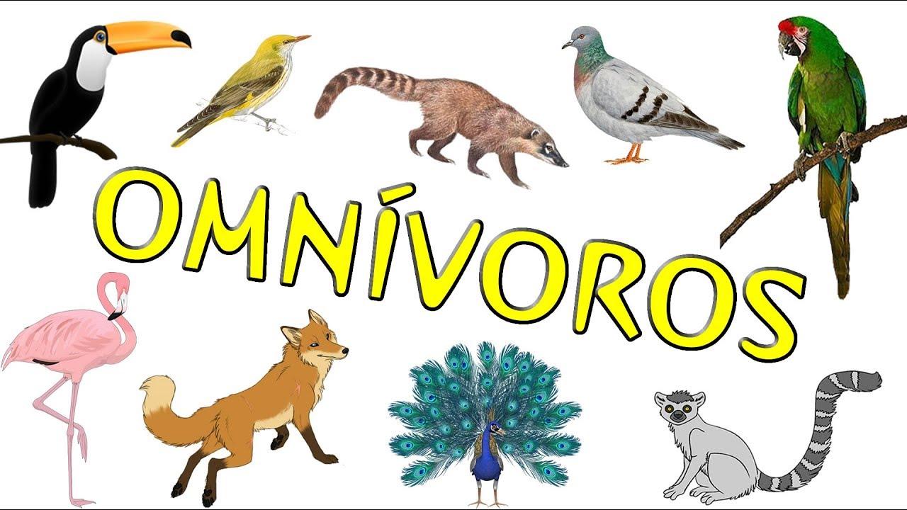 Animales Omnivoros Dibujos Para Colorear: Animales Omnívoros Para Niños