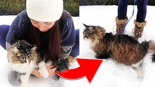 Cat plays in SNOW for the FIRST TIME! (SO FUNNY)