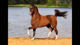 Арабские лошади :D(Это видео создано в редакторе слайд-шоу YouTube: http://www.youtube.com/upload., 2016-06-14T10:39:11.000Z)