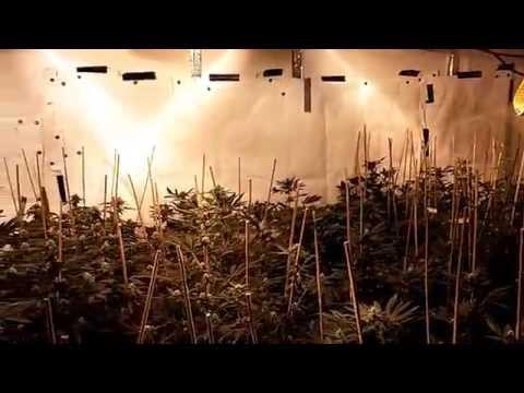 How To Yield The Same as a 10,000 Watt Grow Room Using 6-7,000k Watts!