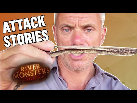 Best of Attack Stories: Part 1 - River Monsters