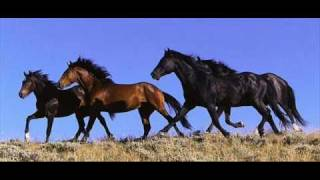 "Alexander Rybak ""13 horses "" (lyrics in the info box)"