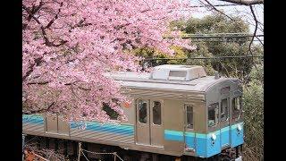 河津桜と伊豆急行線の列車たち