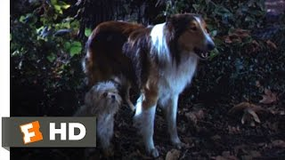 Lassie Come Home (8/10) Movie CLIP - Sticks and Sacrifices (1943) HD