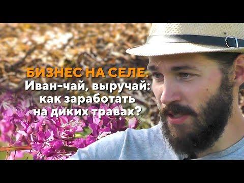 Бизнес на селе. Иван-чай, выручай: как заработать на диких травах?