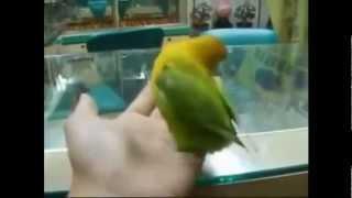 Попугай, порно насмотрелся