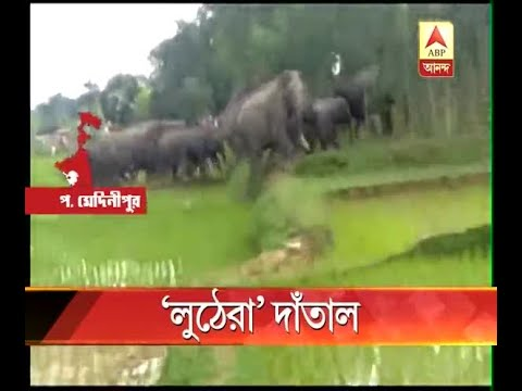 wmid elephant mid day meal attacked