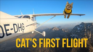 Cats first flight ✈️😻❤️