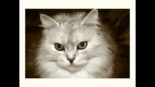 Коты, черные и белые