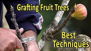 Download lagu Grafting Fruit Trees | The 2 Best Techniques for Grafting Figs and other fruit trees