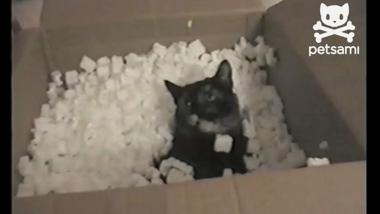 Black Cat Covered In Styrofoam Pellets Youtube