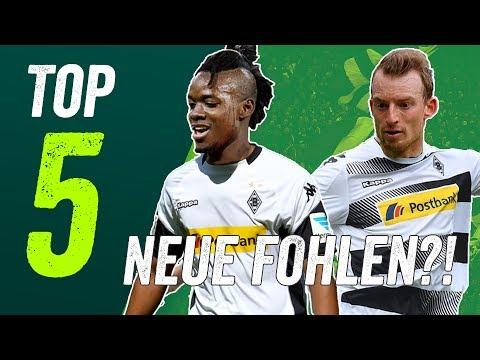 Gladbach Transfers – 5 neue Fohlen für die Saison 2017/18