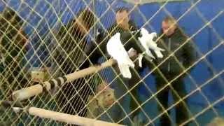 Поездка на Поволжскую выставку голубей г. Саратов 08.11.15