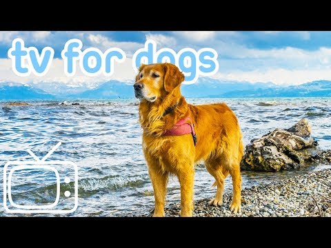TV for Dogs! Entertainment for Dogs and Puppies with Calming Music!