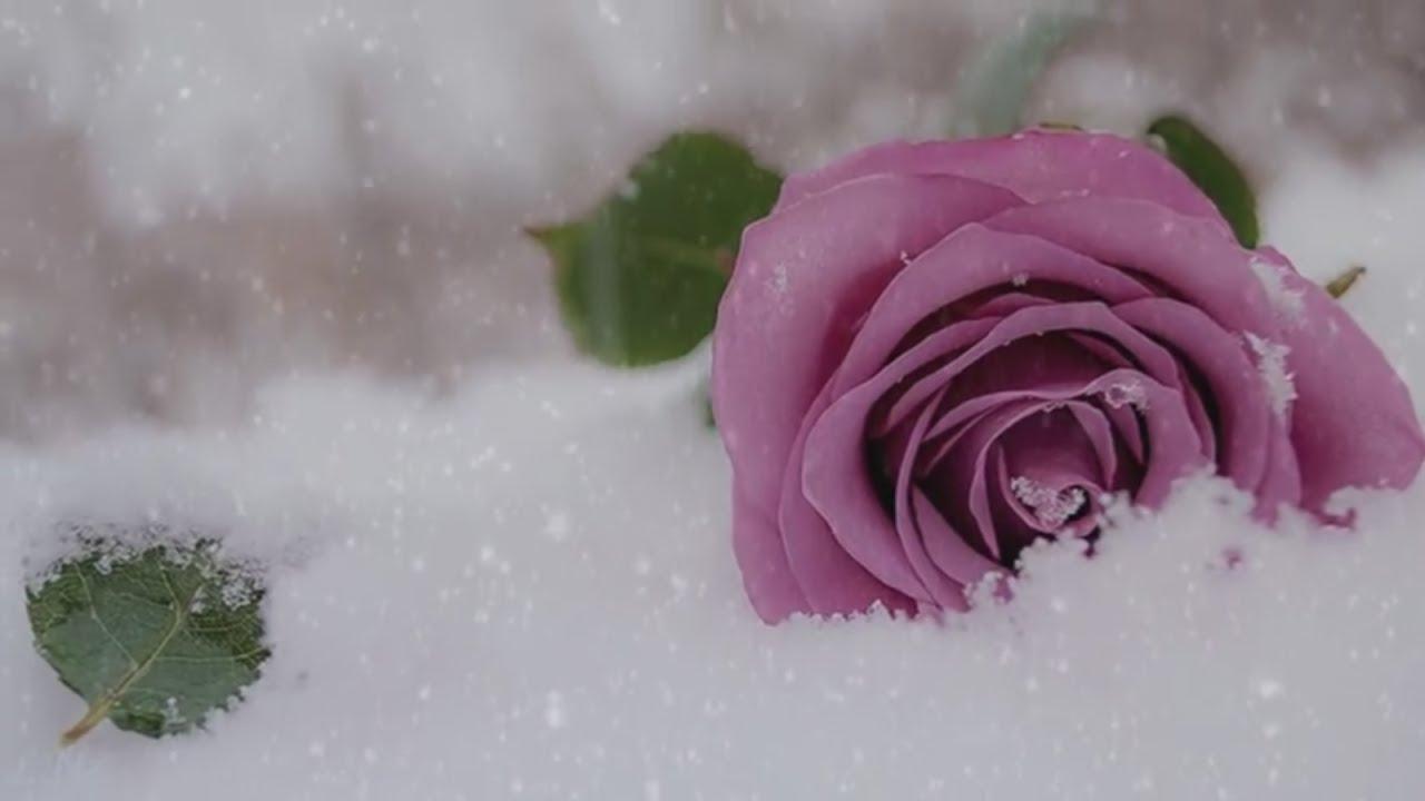 Заснеженная нежность... Secret Garden - Snow-covered tenderness